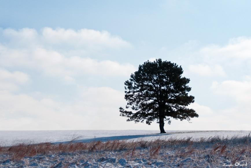 01-03 Winter Tree
