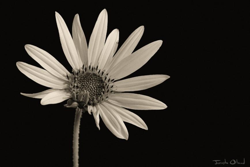 01-25 Sunflower State post