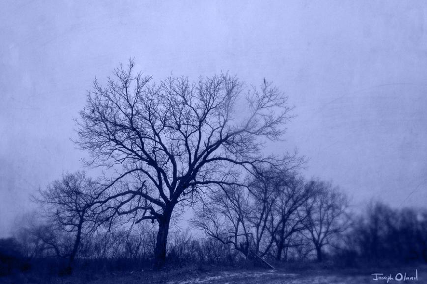 cyanotree