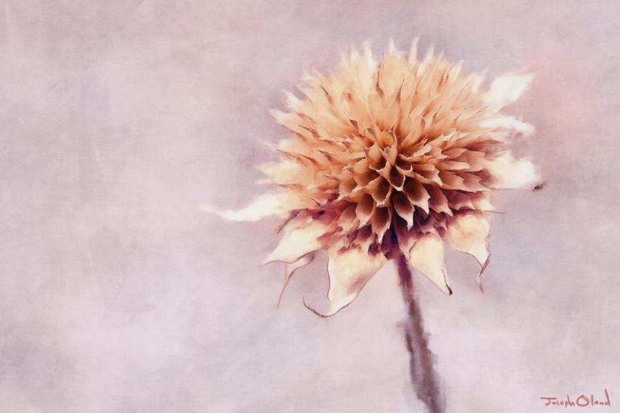 Dead Flower post