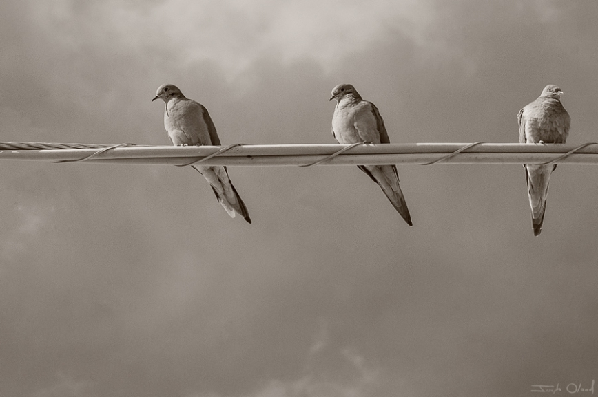 birds-on-wire-post